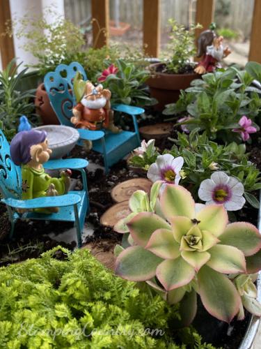 My First Fairy Garden