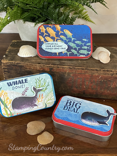 Whale Done Gift Tins